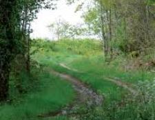 Randonnée pédestre des sous-bois et des chemins creux le dimanche 06 Janvier 2019 à VIERZON