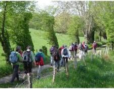 Participation en hausse à la randonnée des sous-bois et des chemins creuxorganisée parVIERZON Rando Loisirs