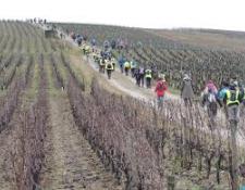 Les Marcheurs d'AUBIGNY Cyclotourisme – Marche – VTT à l'assaut du Piton Sancerrois