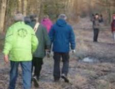 Marche : Bilan de la Randonnée des sous-bois et des chemins creux (VIERZON Rando Loisirs) :