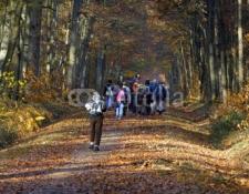 Randonnée des sous-bois et des chemins creux dimanche 07 Janvier 2018 à VIERZON